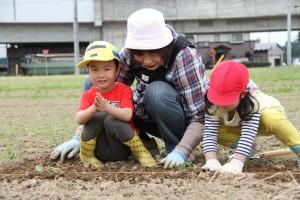 みんなで協力して苗を植えました。