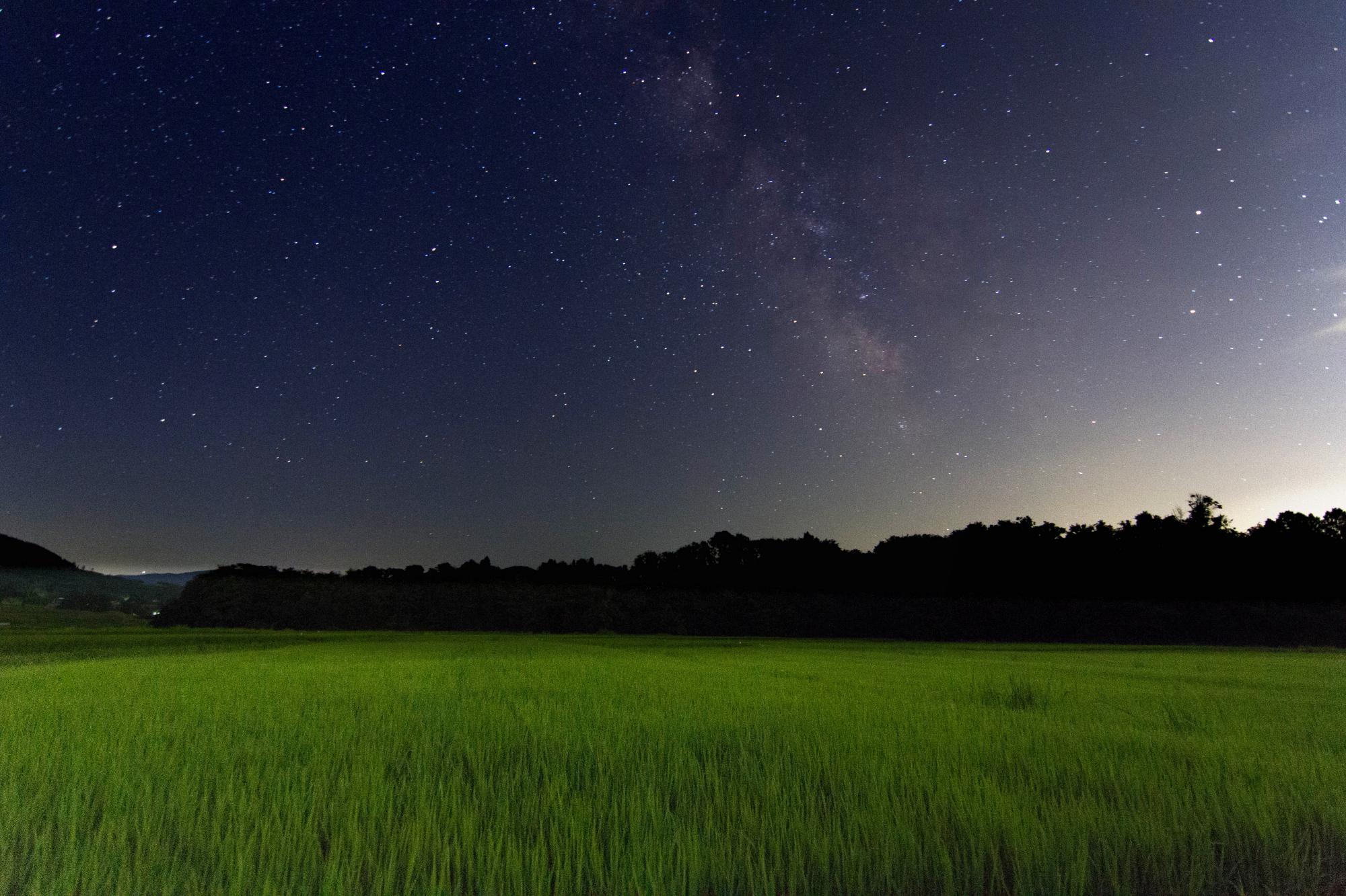 星空、稲を見守る